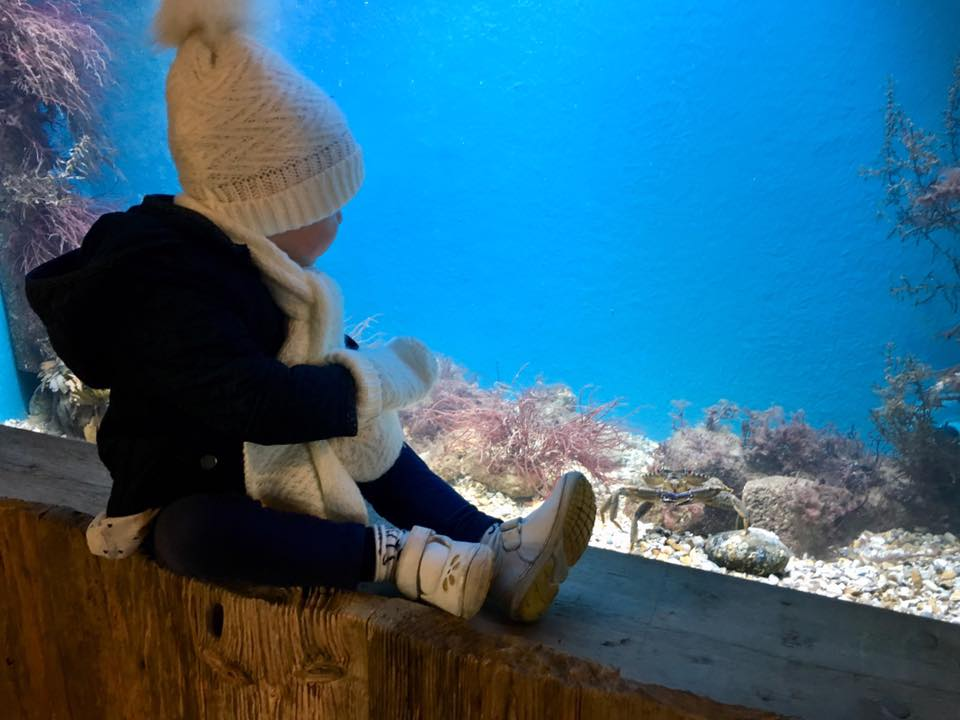 Have you seen our Marine Aquarium? | The Swanage Pier Trust